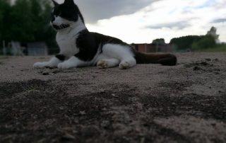 Vanha ja arvokas kissa